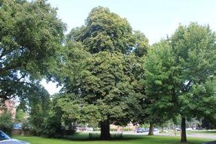 Planten En Bomen : Planten en bomen nemen meer co2 op dan gedacht